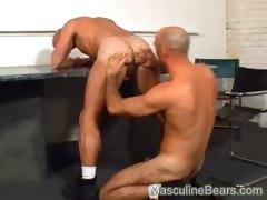 Horny bears take a break from work
